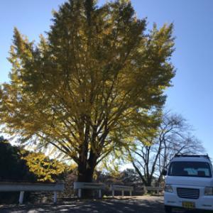 棚田収穫祭