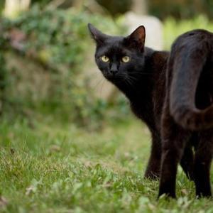 黒猫は福猫