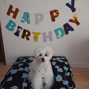 9歳のお誕生日おめでとう