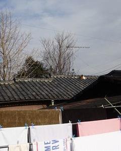 屋根の上に・・・。