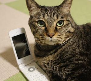 電話相談を受け付けます
