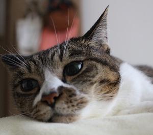 オーダー猫家具