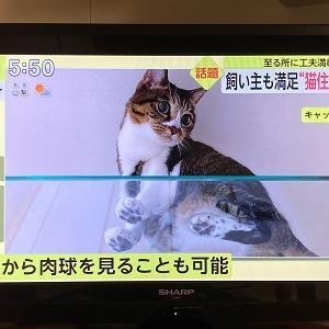 にゃんライフ相談会