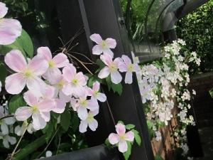 種をまく。芽吹く、花開く。
