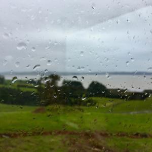 風雨、晴天、蓮、お片づけ/ Rain, Shine, Angus & Lotus