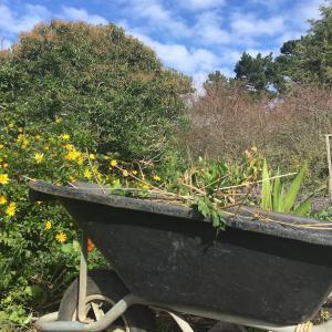 9月の私の庭/ My September Garden