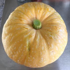 パンプキン料理いろいろ/ Cooking With Yellow Pumpkin
