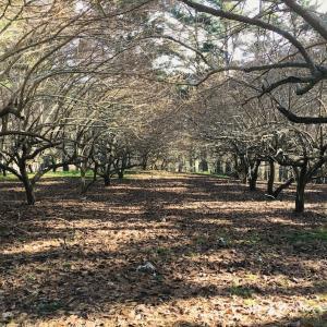 果樹園、iPhone、ツリーファーム/ Orchard, iPhones, X'mas Tree Farm