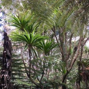 森に見つけるデザイン、お籠りの日々/ Elements Of NZ's Bush
