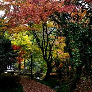 湧水池に映る錦秋の色・隼鷹(はやたか)天満宮
