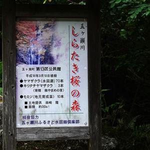 五ヶ瀬の山奥の滝巡り