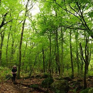 南小国・清流の森