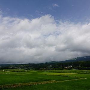 雨上がりの田んぼで見た虫たちのドラマ