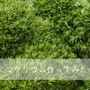 【癒しのミニグリーン】コケリウム作ってみた