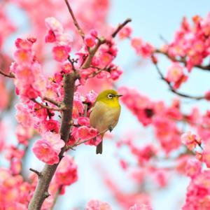 【立春大吉♡】立春の過ごし方&開運アクションはコチラ!