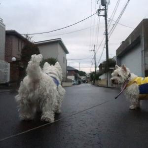想定外の雨の散歩だと1日が暗くなっちゃう