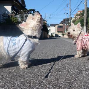 寒くても晴れていれば気持ちよく散歩ができます