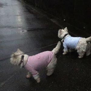 ひっさしぶりにしっかり雨が降っている散歩