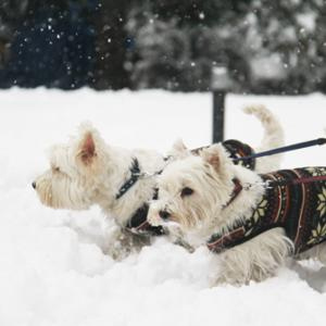 軽井沢は大雪だったようだ