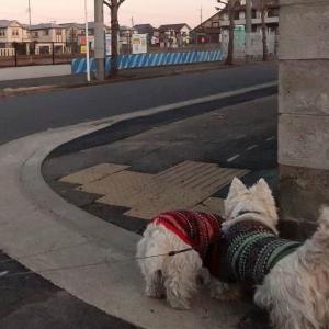 犬たちが寒いと思うのは気温でなく路面温度だろう