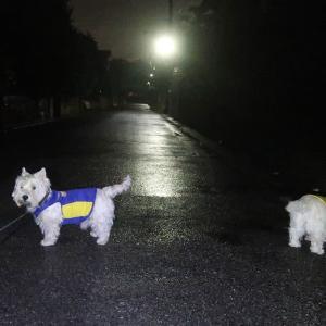 日没後の暗い雨散実施
