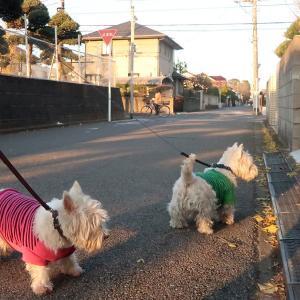 散歩コースの景色が日に日に変わっているのだけど犬目線だとわからないみたい