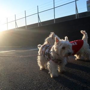 晴れの朝でも散歩コースにはお日様が当たらないから寒いのです