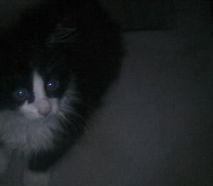 姉がガリッガリの猫を拾ったというので