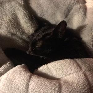 黒猫ココちゃん