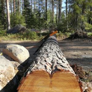 森の家 庭プロジェクト