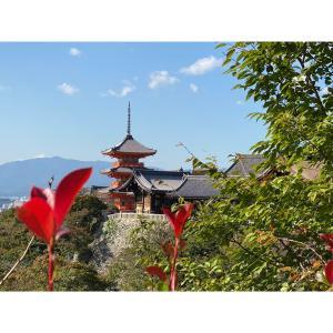 念願の☆京都旅行