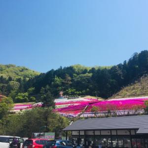 【日々出来】ヤマサ蒲鉾 芝桜 さっちゃんのちーかまどっぐ