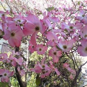 小田急線駅前 祖師谷 絵の教室 クラスレポート 2020 3月