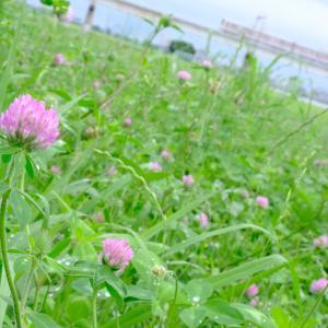 雨上がりの京王多摩川の雑草たち