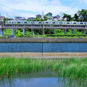 水草と湘南新宿ライン
