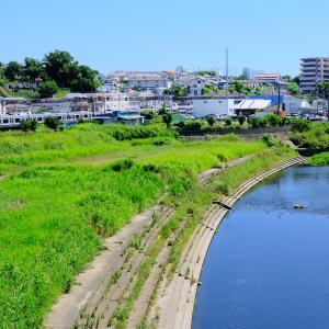 夏真っ盛りの柏尾川と横須賀線