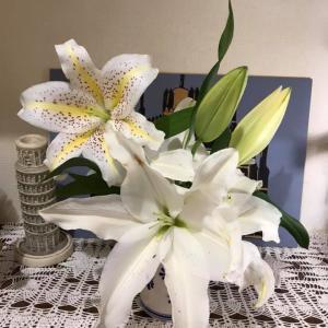 花に癒されて ~ 白百合
