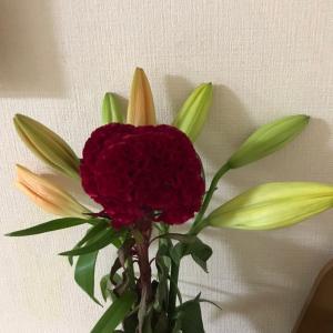 花に癒されて 〜 ケイトウ