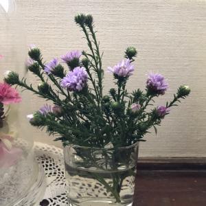 花に癒されて 〜 孔雀草