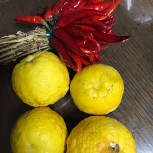 今が旬 〜 柚子 その3 柚子胡椒ふたたび