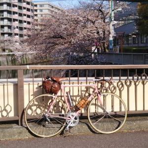 デローザで行く 都内桜巡り