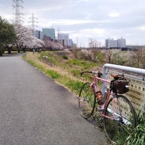 デローザで行く ご近所桜巡り 鶴見川の桜