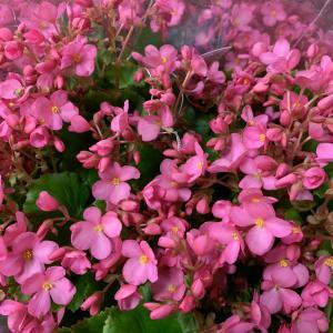 秋から楽しめるお花が入荷中~!