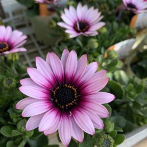魅力的な植物に囲まれて幸せ~植物は元気をくれますよ!