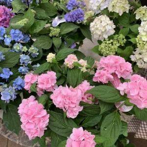 かわいいお花たくさんご用意しています!
