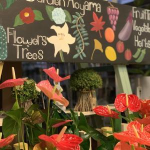 HOT~!お花の入荷が始まりました~!