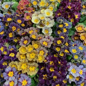 寒い中でも、可愛いお花で春を感じて☆彡