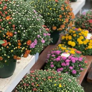 秋の植物を楽しみましょう~