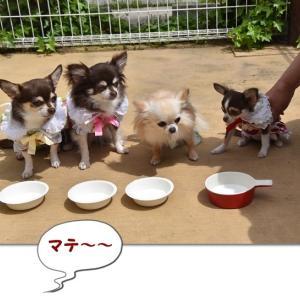 山羊ミルク~カフェにて(o^^o)
