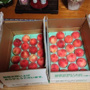 納涼、桃祭り